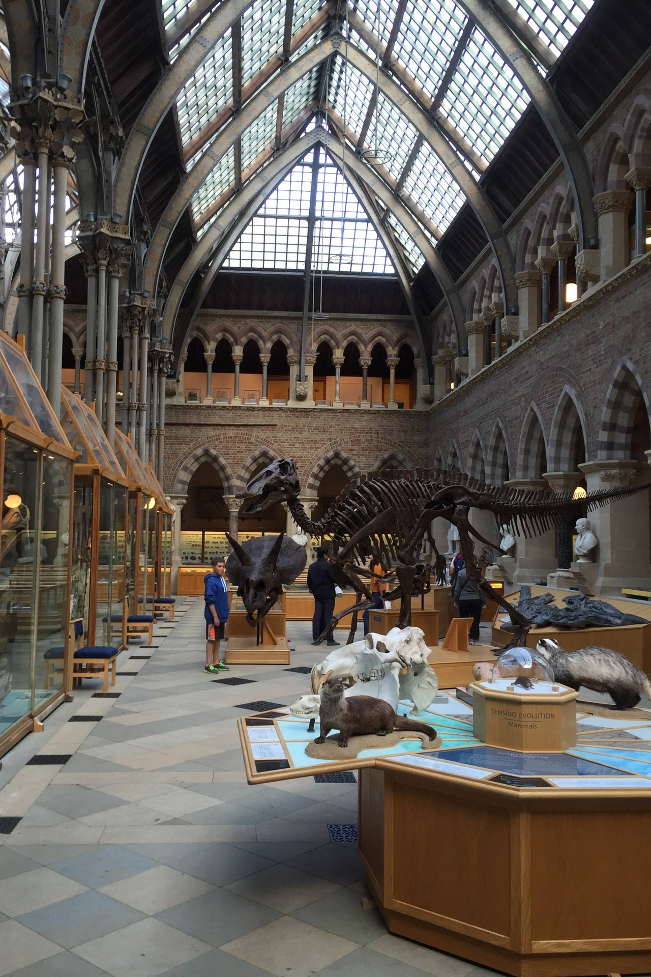 University Of Oxford: The Oxford University Museum Of Natural History